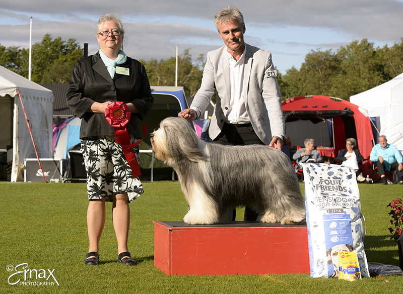 FCI group I - Winners of the International Dog Show Tvaaker (Sweden), 10 July 2015 (BIS foto)
