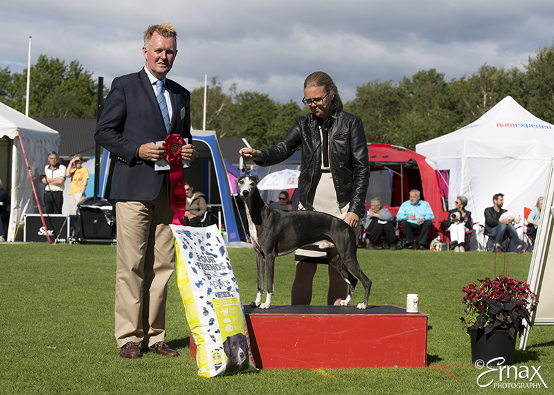FCI group X - Winners of the International Dog Show Tvaaker (Sweden), 10 July 2015 (BIS foto)