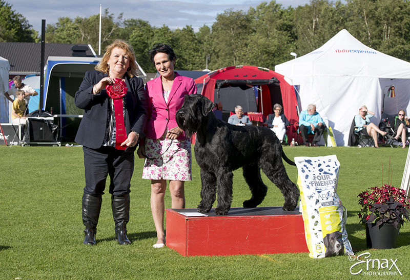 FCI group II - Winners of the International Dog Show Tvaaker (Sweden), 10 July 2015 (BIS foto)