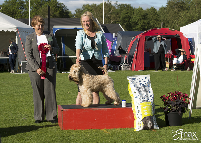 FCI group III - Winners of the International Dog Show Tvaaker (Sweden), 10 July 2015 (BIS foto)