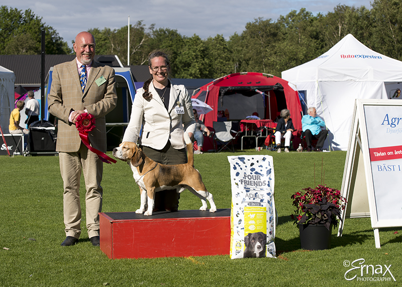 FCI group IV / VI - Winners of the International Dog Show Tvaaker (Sweden), 10 July 2015 (BIS foto)