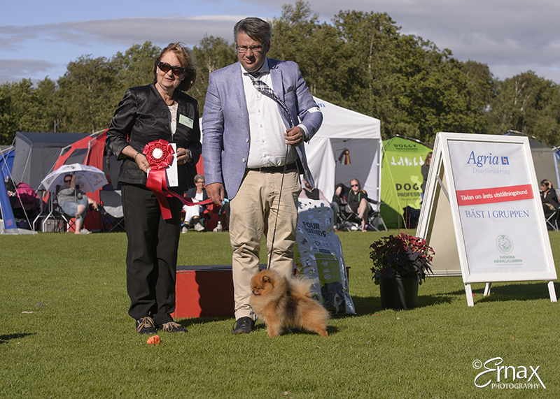 FCI group V - Winners of the International Dog Show Tvaaker (Sweden), 10 July 2015 (BIS foto)