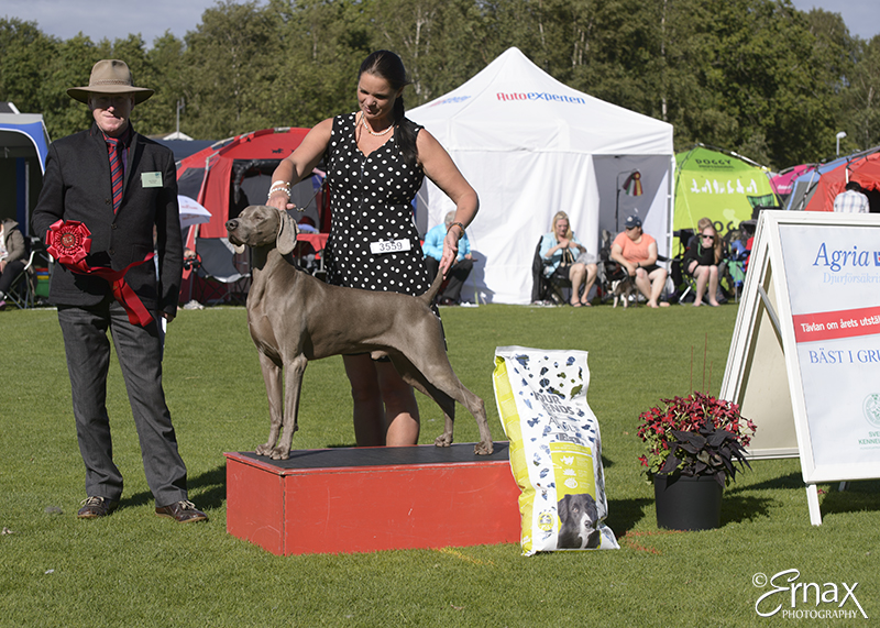 FCI group VII - Winners of the International Dog Show Tvaaker (Sweden), 10 July 2015 (BIS foto)