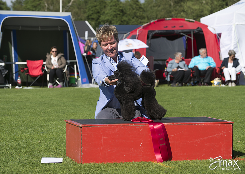 FCI group IX - Winners of the International Dog Show Tvaaker (Sweden), 10 July 2015 (BIS foto)
