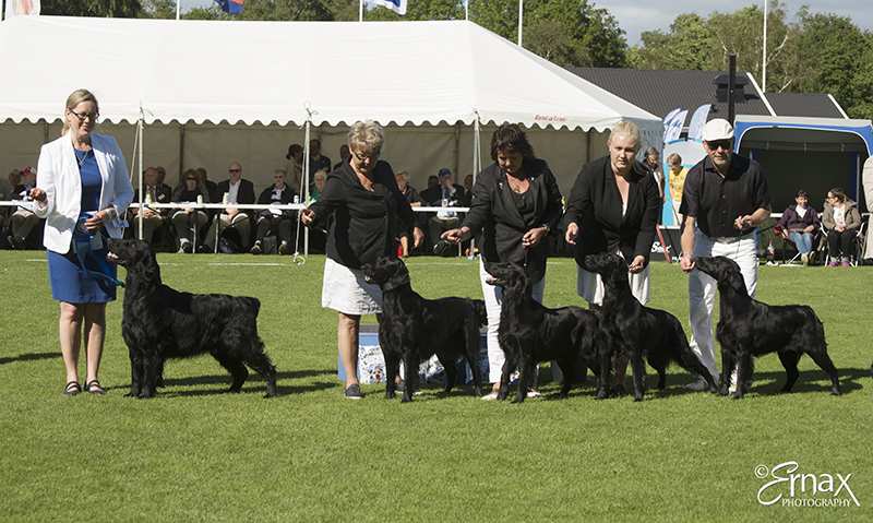 Best Progeny - Winners of the International Dog Show Tvaaker (Sweden), 10 July 2015 (BIS foto)