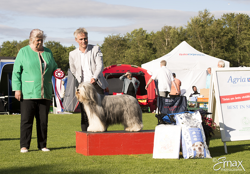Best in Show - Winners of the International Dog Show Tvaaker (Sweden), 10 July 2015 (BIS foto)