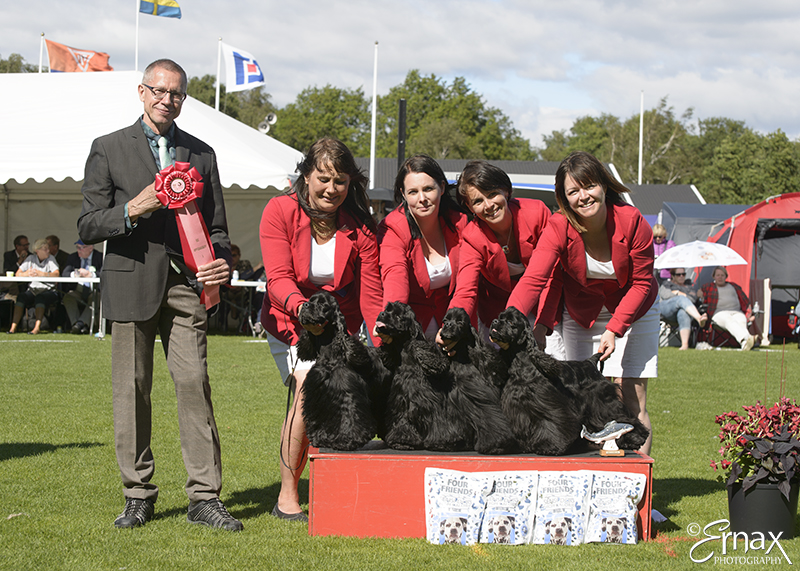 Best Breeders Group - Winners of the International Dog Show Tvaaker (Sweden), 10 July 2015 (BIS foto)