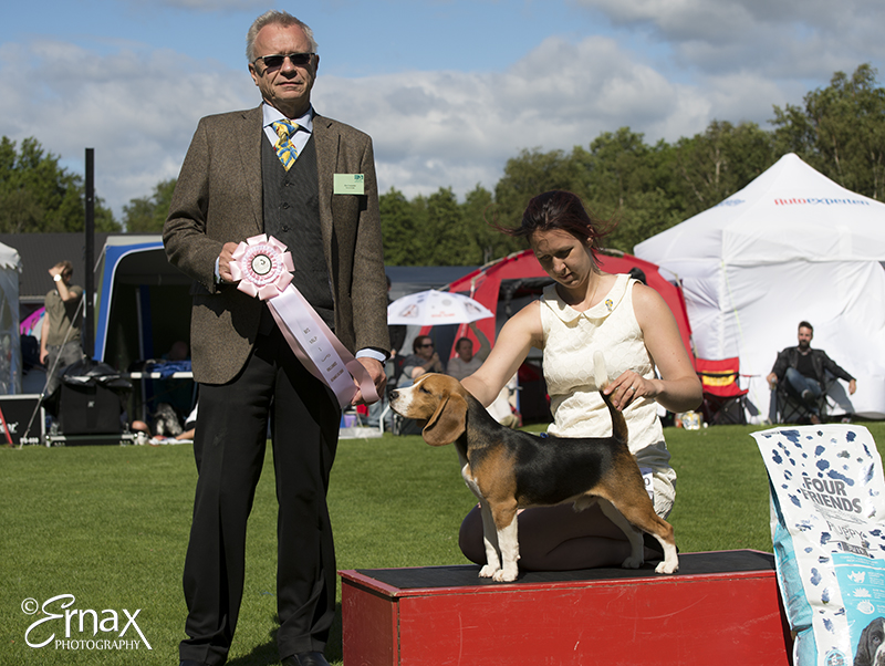 Best Puppy - Winners of the International Dog Show Tvaaker (Sweden), 10 July 2015 (BIS foto)