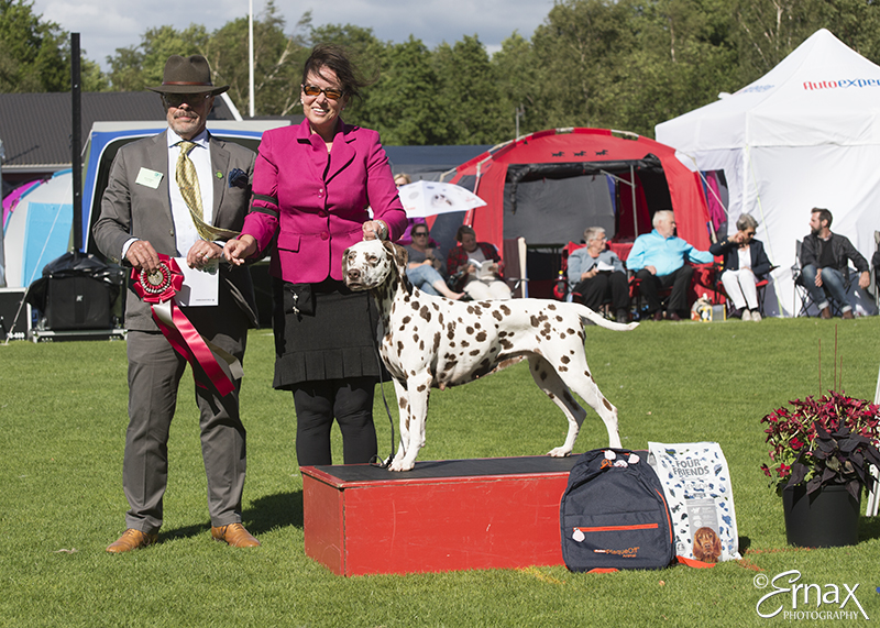 Best Veteran - Winners of the International Dog Show Tvaaker (Sweden), 10 July 2015 (BIS foto)