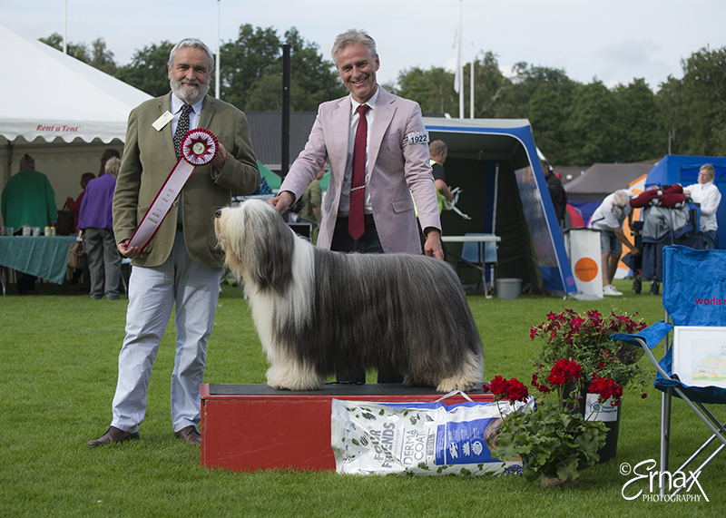 Best in Show (BIS) - BIS CACIB Tvaaker (Sweden), Friday, 8 July 2016 (photo)