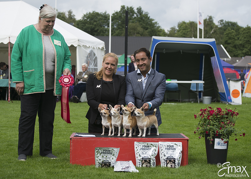 Best Breeders' Group - BIS CACIB Tvaaker (Sweden), Friday, 8 July 2016 (photo)